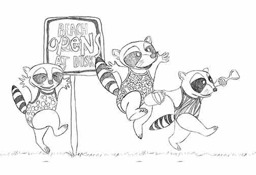 Raccoon Beach sketch